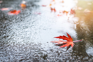 Beautiful fallen autumn leaves with water drops on ground.