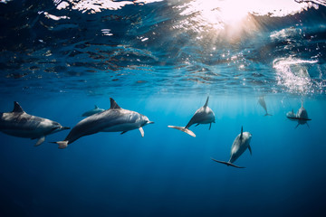 Spoed Foto op Canvas Dolfijn Dolphins swimming underwater in ocean at Mauritius
