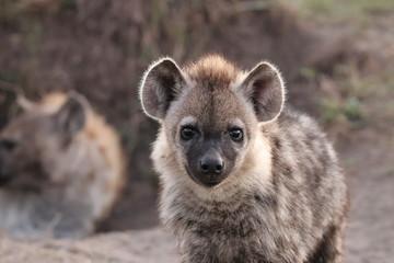 Fotobehang Hyena Spotted hyena cub face closeup.