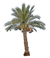 Close up of Date palm