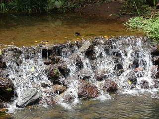 Foto auf Leinwand Forest river waterfall with stones, vegetation and trees around in the park of mangabeiras - Belo Horizonte -MG- Brazil