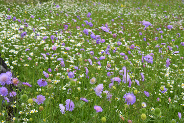field of white and purple wild flowers in tall green grass