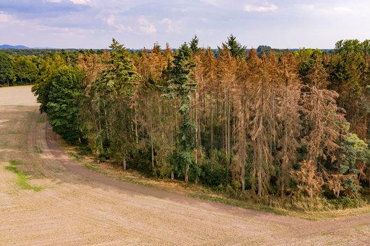 Luftbild eines sterbenden deutschen Waldes