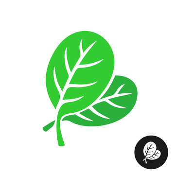 Spinach leaves illustration. Simple elegant style two green leaves of spinach vegetable salad.