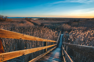 Landscape photo of a cane thicket during the golden hour in Grado - Friuli Venezia Giulia - Italy 2