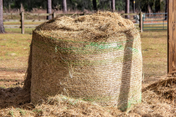 Rolled Bale of Hay in Pasture