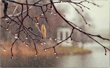 Rainy autumn in the old Park
