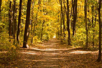Canvas Prints Honey Autumn landscape in yellow forest.