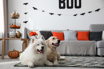 Cute dogs in room decorated for Halloween