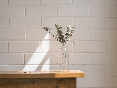 Close up of dried eucalyptus leaves in glass bottle on wooden shelf against painted white brick wall with shadow