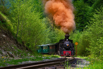 Running wood-burning locomotive of Mocanita (Maramures, Romania). Green forest in background