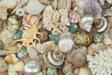 Big collection of tropical seashells and corals as pattern. Sea life and ocean bottom concept.