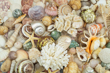 Mixed tropical seashells, different corals and starfishes mixed together. Sea life and ocean bottom concept.