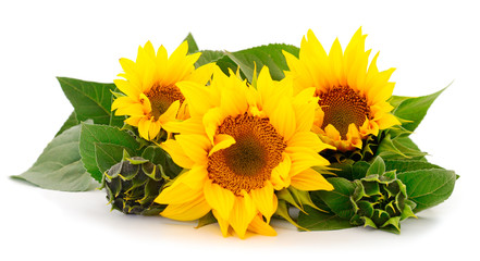 In de dag Zonnebloem Group of yellow bright beautiful sunflower flowers.