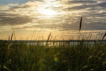 Sonnenuntergang hinter dem Schilf in Zingst Fotoväggar