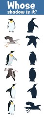 guess where whose shadow Antarctica birds flat