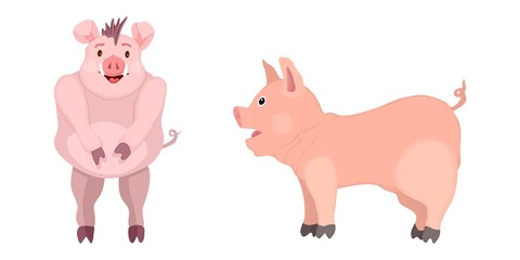 selection of cartoon pigs. drawing mascots of the year