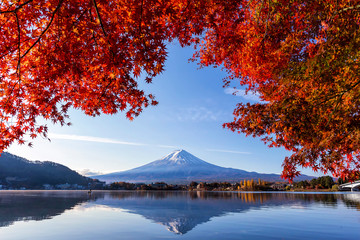 Wall Murals Fuji Mountain in autumn with colorful maple leaves at Lake Kawaguchi, Yamanashi, Japan. Mount Fuji, Fujisan located on Honshu Island, is the highest mountain in Japan.