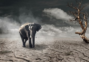 Klimawandel  Wall mural