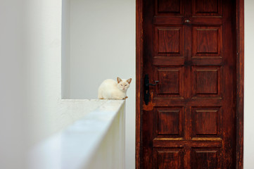 White cat lying on a white wall in front of a closed dark brown door