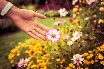 Spring Flowers in Bloom - Nature
