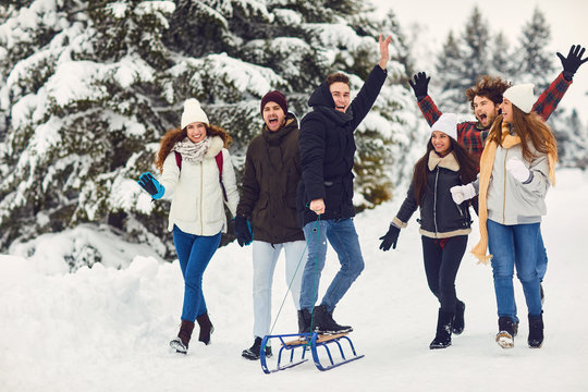 Cheerful people on sleigh in snowy woods