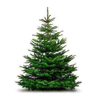 Grüne Wehnachtsbäume isoliert auf weißem Hintergrund