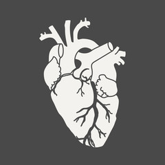 Anatomical human heart - white silhouette isolated on black background. Hand drawn sketch. Vector illustration.