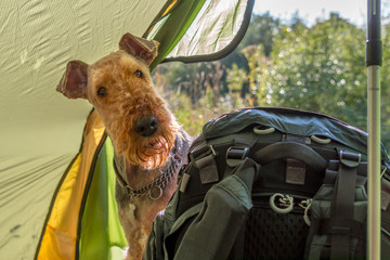 Trekking mit Hund