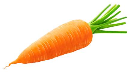 Fototapeta One whole carrot isolated on white background obraz