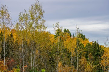 Colorful trees in autumn on the North Shore