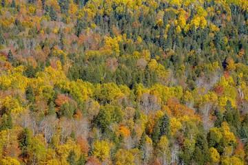 Autumn Trees at Oberg Mountain