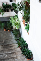 Potted plants on the stairs, stylish decor