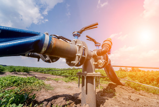 Drip irrigation system. Water saving drip irrigation system being used in a young carrot field.