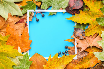 Wall Mural - Frame made of beautiful autumn leaves on color background