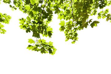Blätter an Bäumen