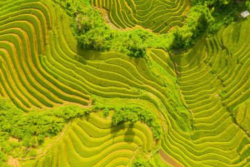 Aerial top view of paddy rice terraces, green agricultural fields in countryside or rural area of...