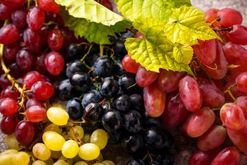 Fototapeta Assortment of different sort of grapes