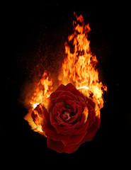 Burning red rose, dark atmospheric mood, fantasy background