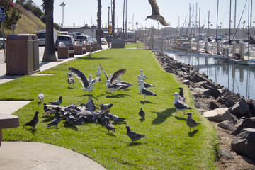 Seagulls and pigeons in grassy park marina harbor lovely day