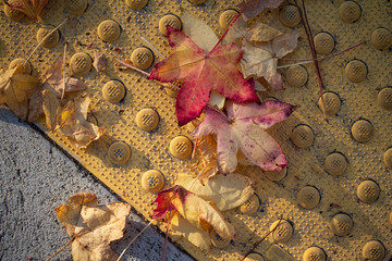 abstract background with yellow sidewalk and autumn leaves falling
