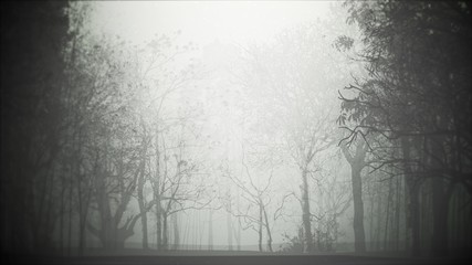 Wall Murals Gray Mystical halloween background with dark forest and fog
