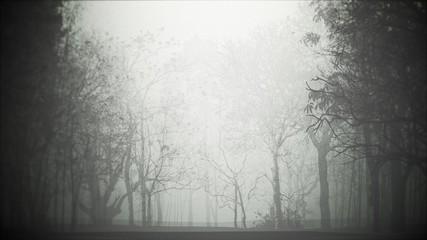 Foto auf Leinwand Grau Mystical halloween background with dark forest and fog