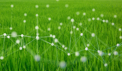 Wall Mural - smart agriculture concept with machine, deep learning, neural network technology, the artificial intelligence network in smart farm to disrupt