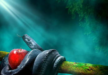 Black snake with an apple fruit in a branch of a tree