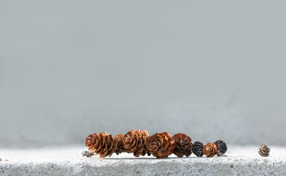 background of a set of pine cones. Copy space