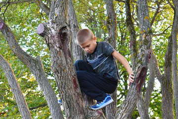 A boy climbs trees.  Cheerful happy free childhood in the fresh air.