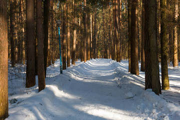 Walking road through the park on a winter day
