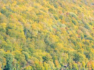herbstliche Textur von bunten Bäumen