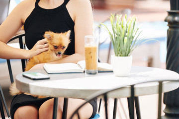 Cute small dog enjoying being petted by young woman sitting at cafe table